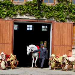 The Arabian Horses of Poland: Once Again the Wellspring for the Greatest Arabian Horses in the World